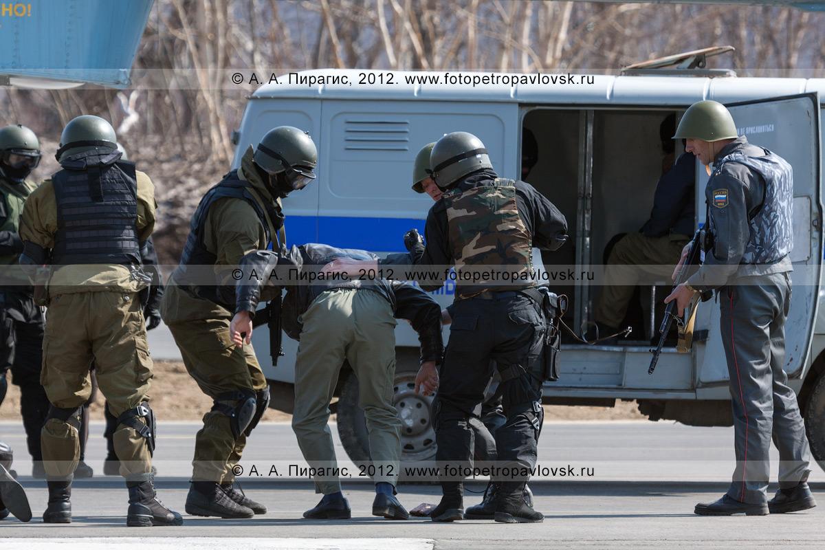 Фотография: спецназ и полицейские осуществляют конвоирование обезоруженного террориста до полицейского автомобиля. Контртеррористические учения по пресечению теракта на объекте воздушного транспорта
