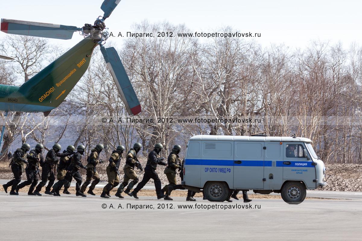 Фотография: бойцы спецназа сопровождают полицейский автомобиль с задержанными террористами. Контртеррористические учения по пресечению теракта на объекте воздушного транспорта