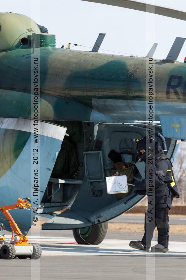 Фотография: сапер (специалист-подрывник) в защитном бронированном костюме с помощью манипулятора достает бомбу (взрывное устройство) из заминированного вертолета. Контртеррористические учения по пресечению теракта на объекте воздушного транспорта