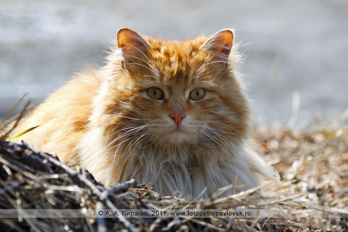 Фотография: кот или кошка
