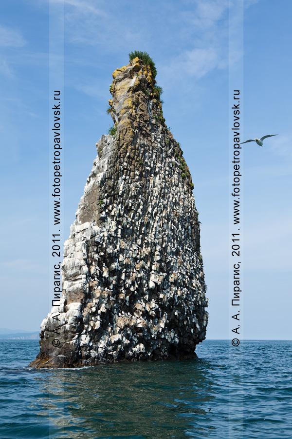 Фотография: кекур Часовой возле острова Старичков. Авачинский залив, Тихий океан