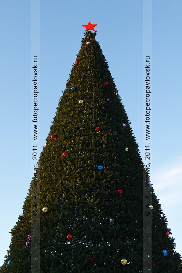 Фотография: новогодняя елка в городе Петропавловске-Камчатском