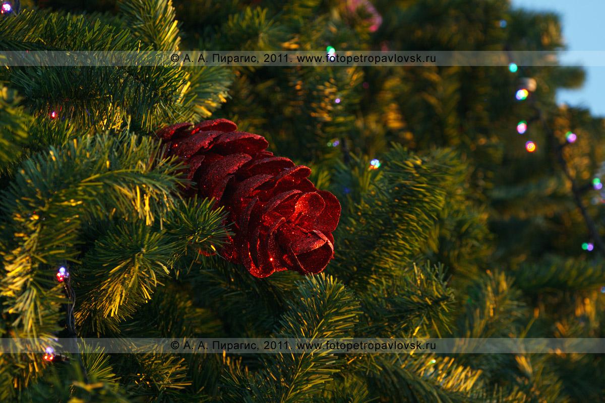 Фотография: шишка на новогодней елке в центре города Петропавловска-Камчатского