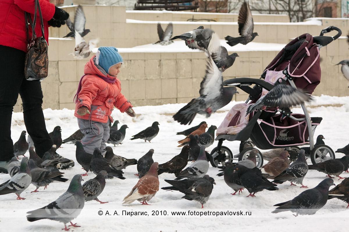 Фотография: камчатские голуби. Городской фонтан на 6-м километре в Петропавловске-Камчатском