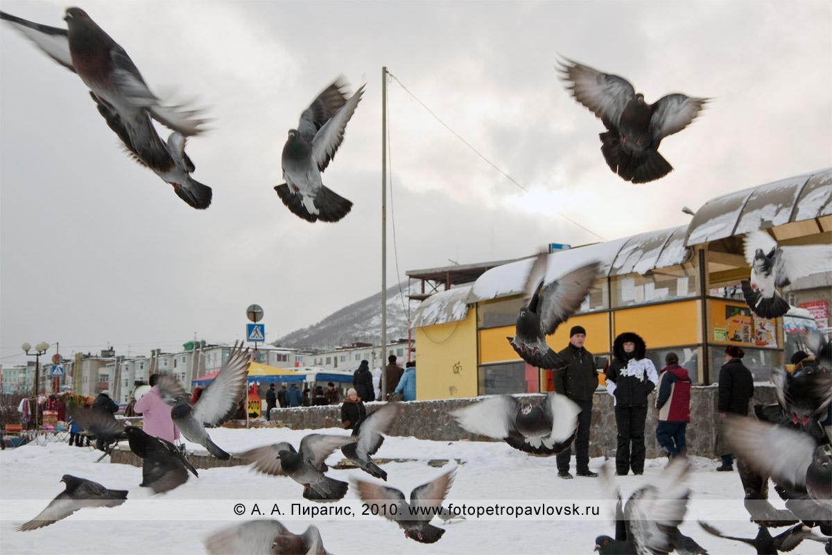 """Фотография: автобусная остановка """"ЦУМ «Петропавловск»"""". Полет камчатских голубей"""