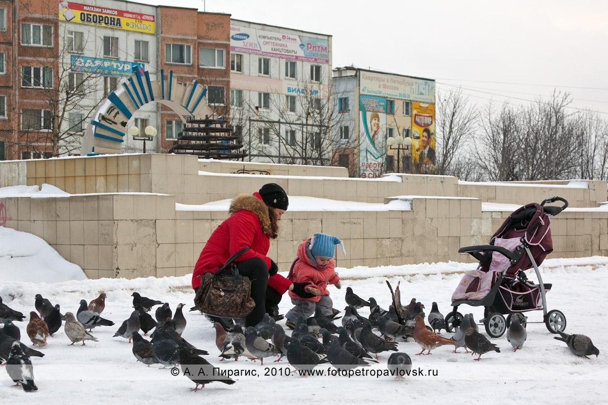 Фотография: камчатские голуби на городском фонтане Петропавловска-Камчатского