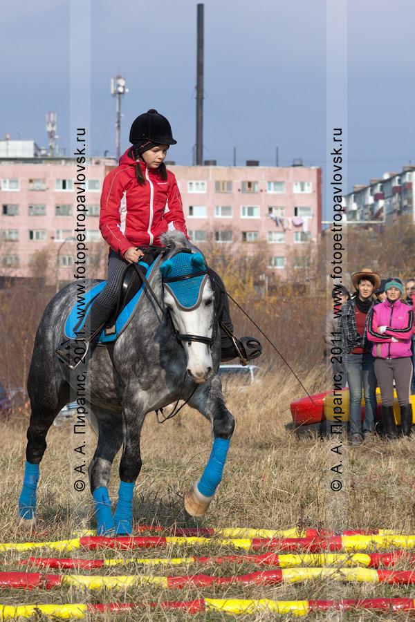 Фотография: соревнования по конному спорту в дисциплине манежная езда. Камчатка, город Петропавловск-Камчатский