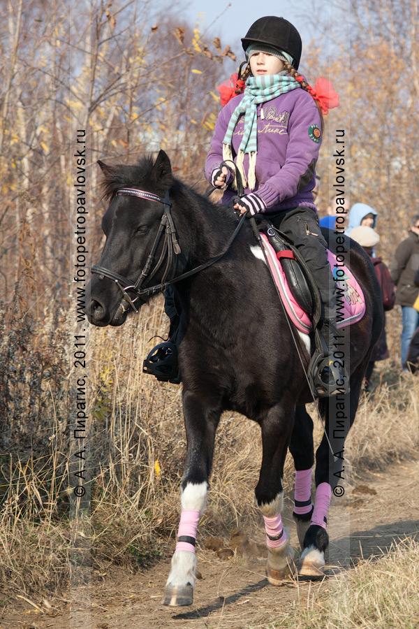 Фотография: выступление камчатской всадницы на соревнованиях по конному спорту в дисциплине манежная езда. Камчатский край, город Петропавловск-Камчатский