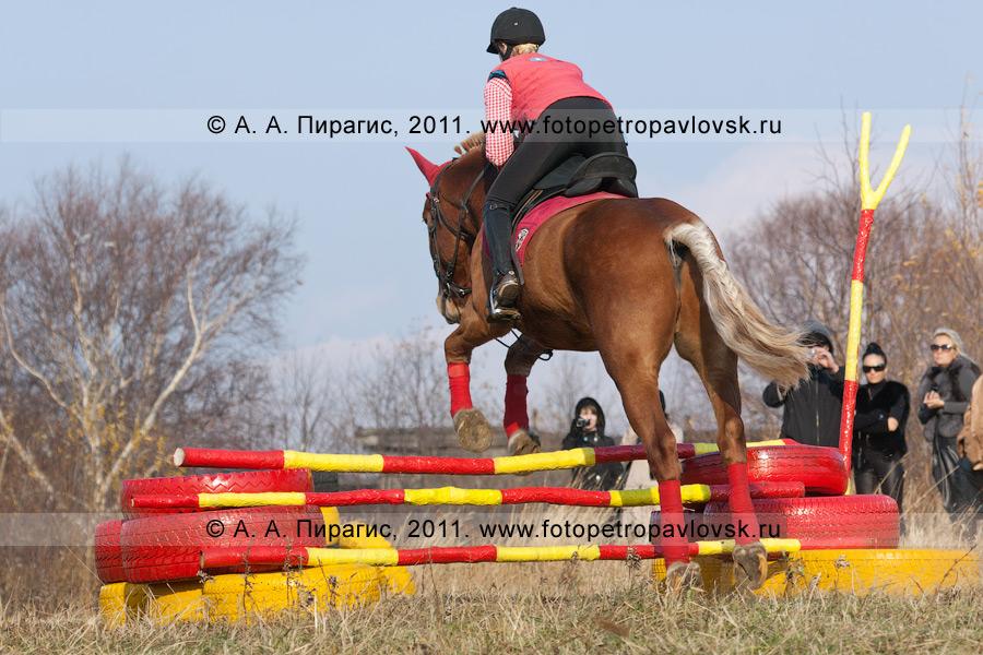 Фотография: конный спорт на Камчатке. Прыжки через препятствия. Камчатский край, город Петропавловск-Камчатский