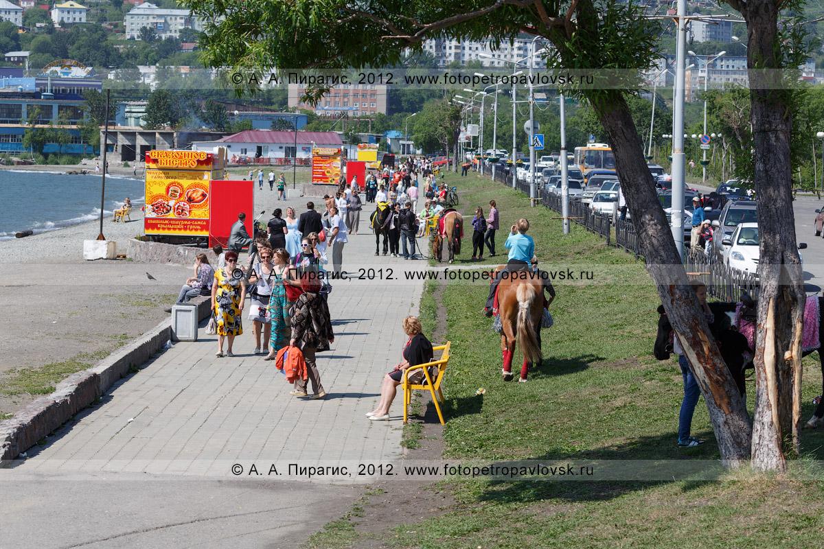 Фотография: лошади на газоне. Озерновская коса в центре Петропавловска-Камчатского
