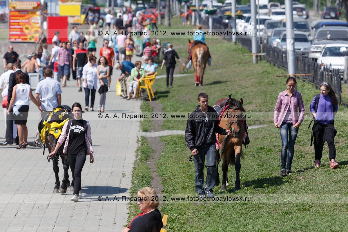 Фотография: лошади на газоне в центре столицы Камчатского края