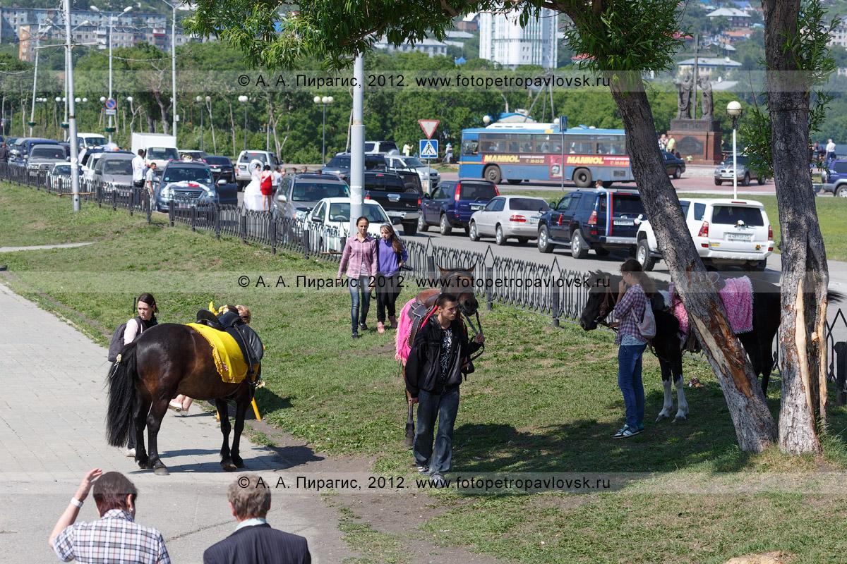 Фотография: стойло лошадей на газоне в центре города. Камчатский край, Петропавловск-Камчатский, Озерновская коса