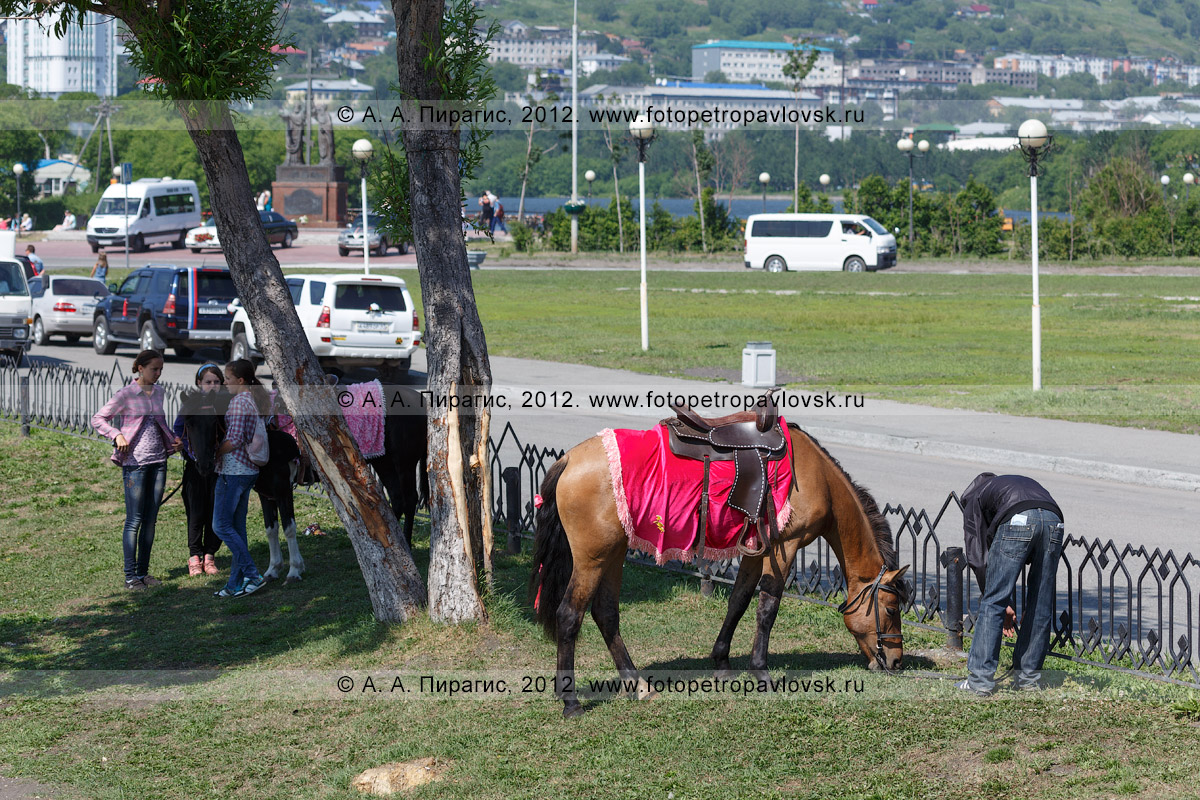 Фотография: лошадки на газоне в центре столицы Камчатского края