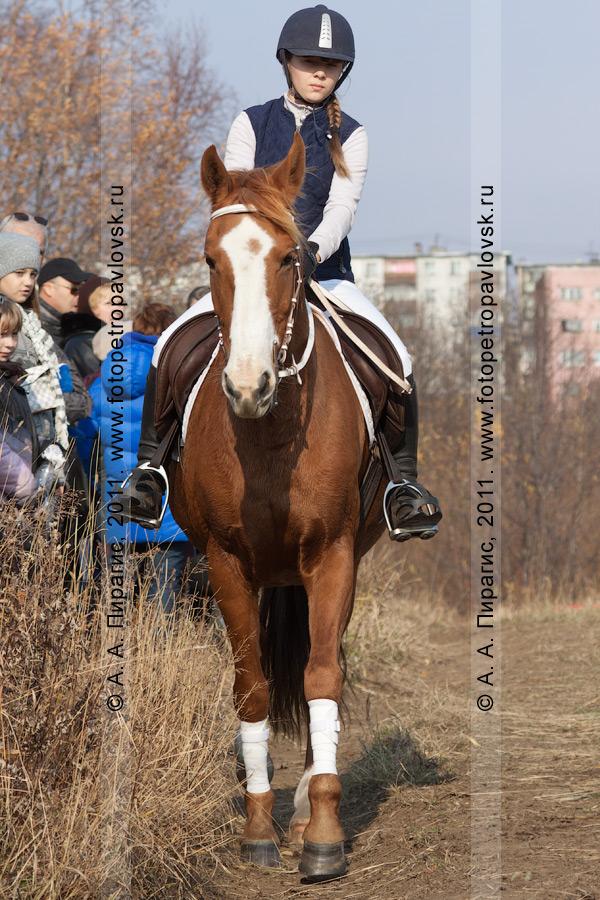 Фотография: конный спорт в Камчатском крае. Соревнования в дисциплине манежная езда