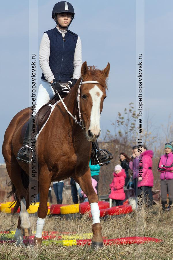 Фотография: соревнования по конному спорту в Петропавловске-Камчатском в дисциплине манежная езда