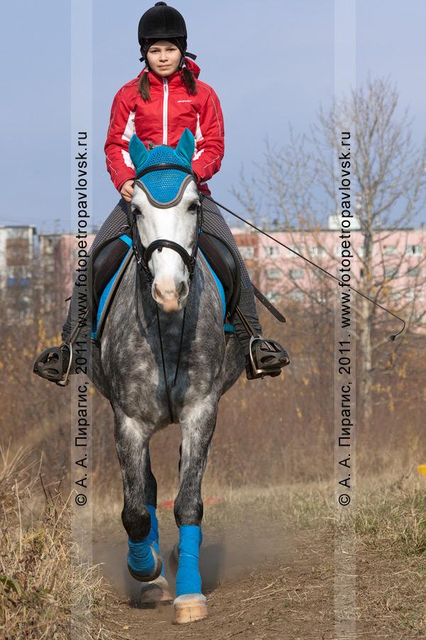 Фотография: соревнования по конному спорту на Камчатке в дисциплине манежная езда