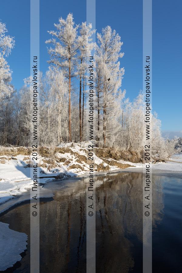 Фотография: живописный берег реки Камчатки зимой