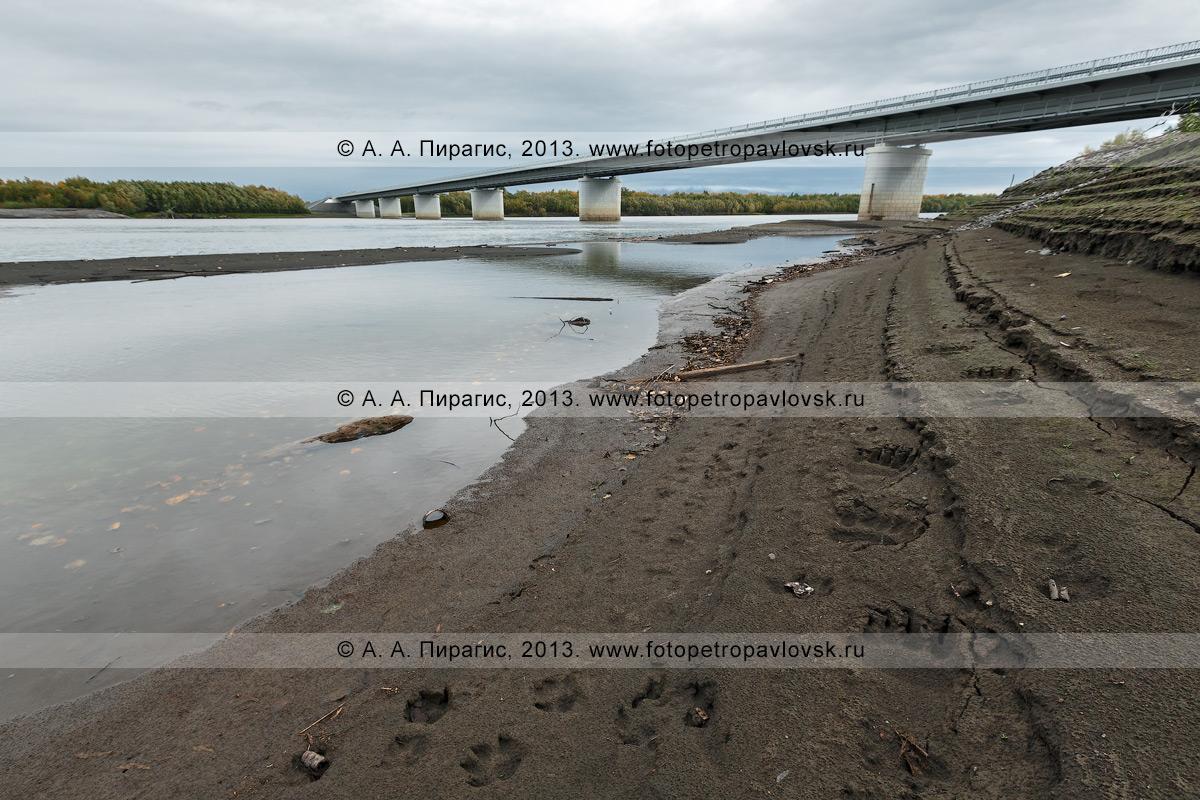 Фотография: река Камчатка, мост через реку Камчатку на 168-м километре автотрассы Мильково — Ключи — Усть-Камчатск. На фотографии видны следы камчатского бурого медведя, который шел по берегу в районе моста через реку Камчатку