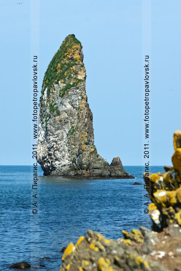 Фотография: кекур Караульный, остров Старичков, Авачинский залив, Тихий океан