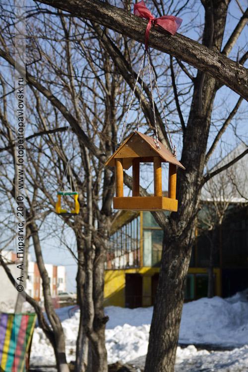 Фотография: кормушка для птиц в городе Петропавловске-Камчатском