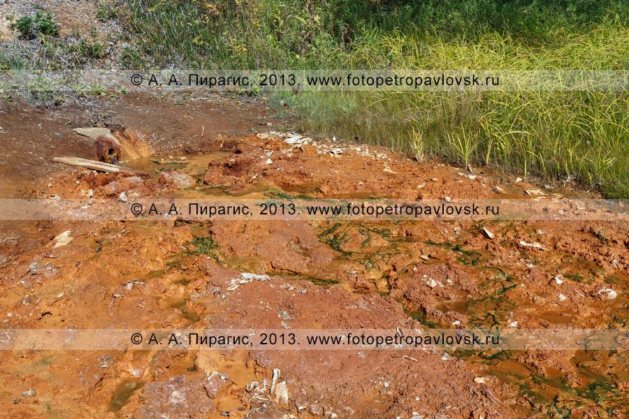 Фотография: Краеведческие горячие источники, Налычевская долина, Камчатский край