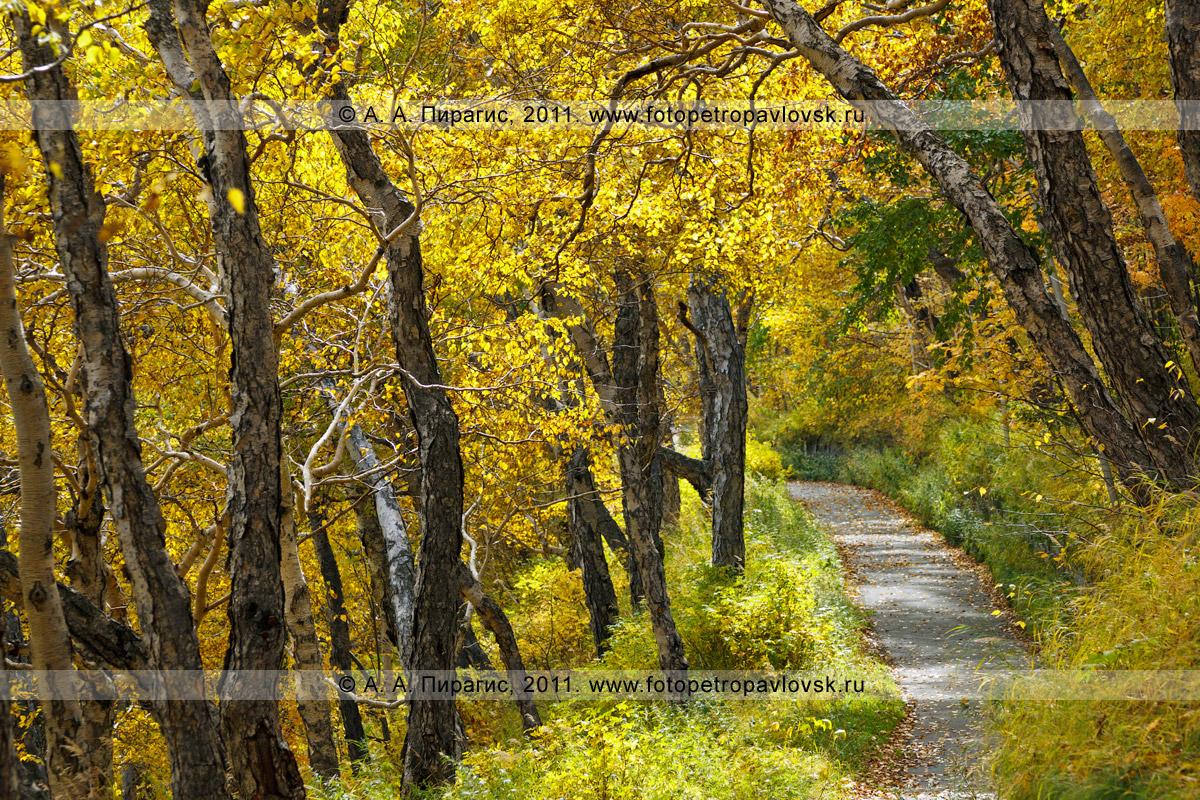 Фотография: золотая осень Камчатки. Петропавловск-Камчатский, Никольская сопка