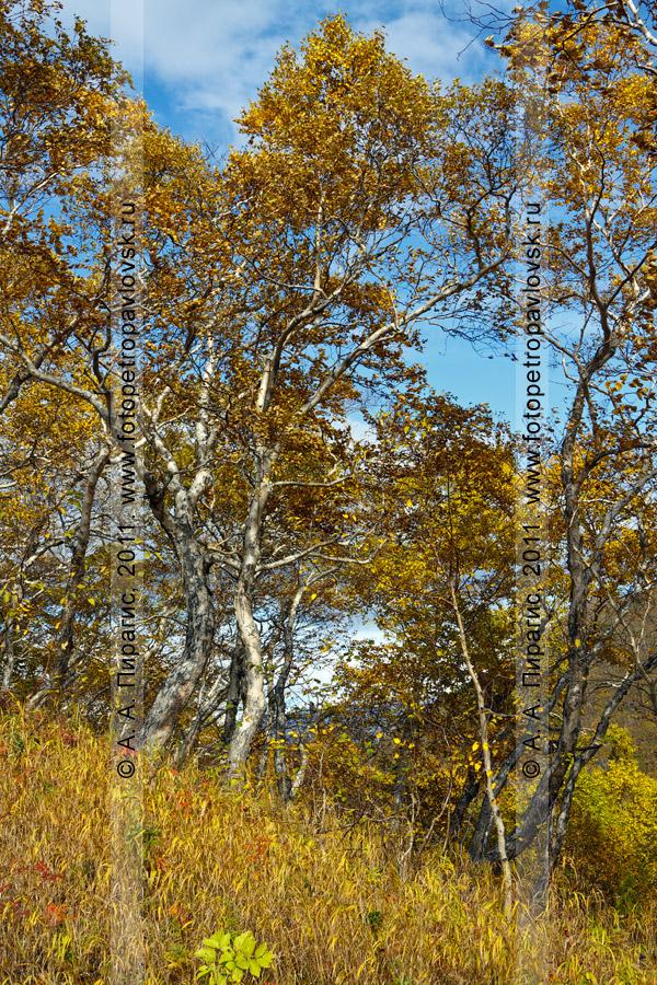Фотография: осень в центре Петропавловска-Камчатского. Сопка Любви (Никольская сопка)