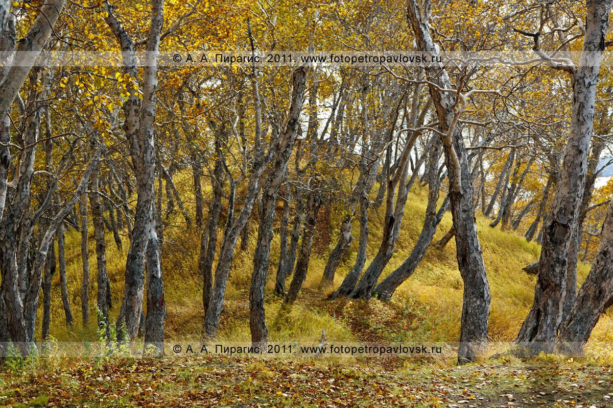 Фотография: камчатский пейзаж — осень на сопке Любви (Никольской сопке) в центре города Петропавловска-Камчатского
