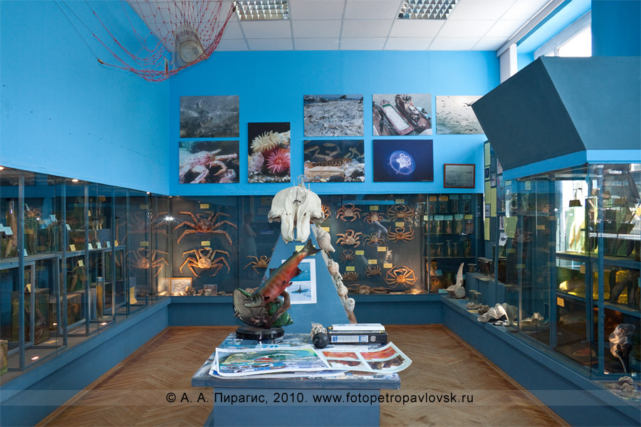 Фотография: музей КамчатНИРО: общий вид экспозиции музея Камчатского научно-исследовательского института рыбного хозяйства и океанографии