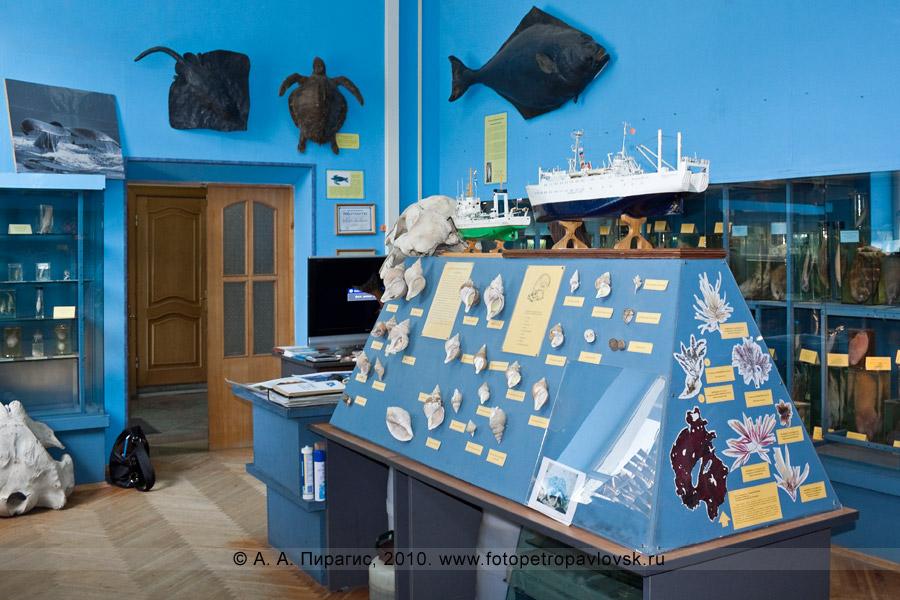 """Фотография: экспозиция в музее Камчатского научно-исследовательского института рыбного хозяйства и океанографии (ФГУП """"КамчатНИРО"""")"""
