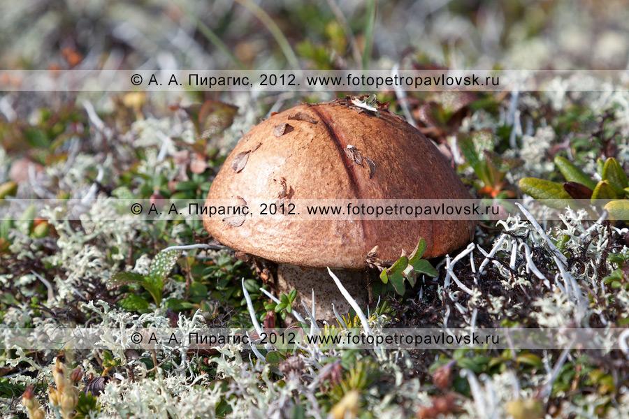 Фотография: грибочек