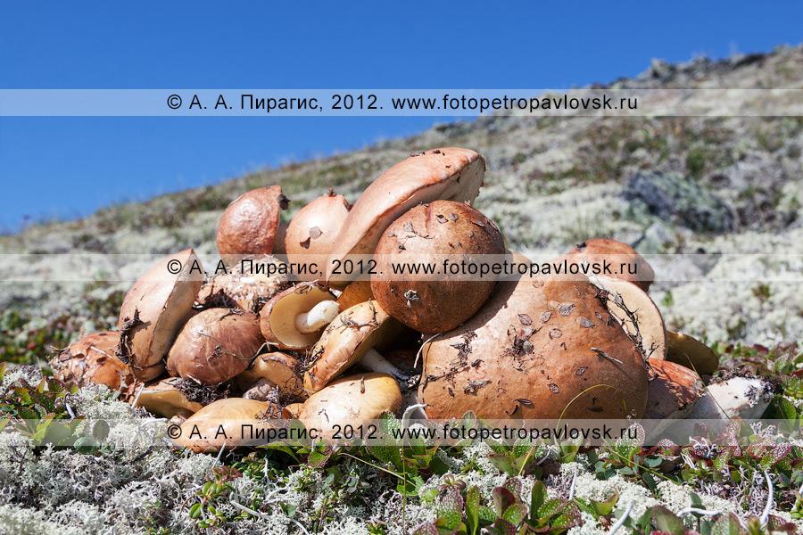 Фотография: кучка собранных грибов