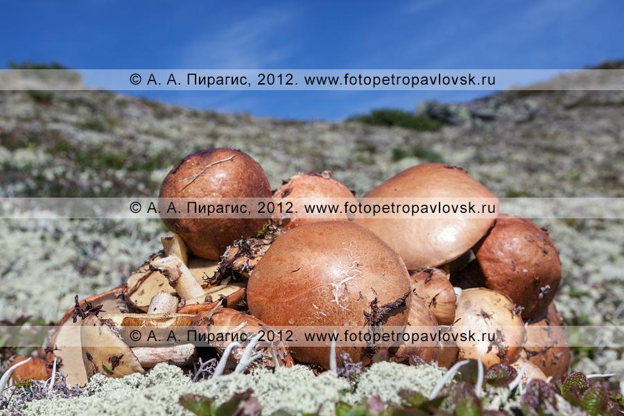 Фотография: кучка собранных грибов в горах