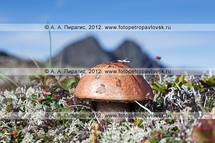 Фотография: гриб на фоне гор