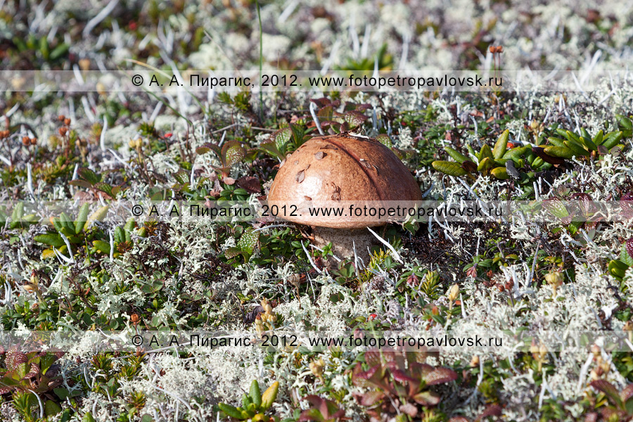 Фотография: одинокий гриб