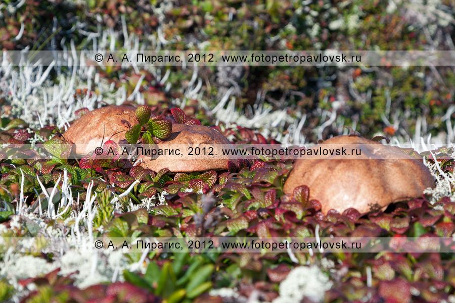 Фотография: группа грибов