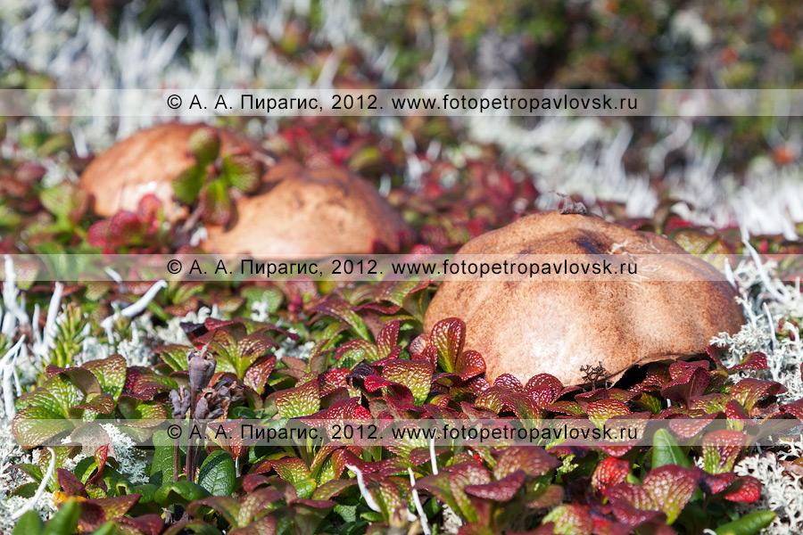 Фотография: гриб на фоне грибов