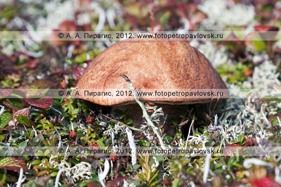 Фотография: красивый гриб