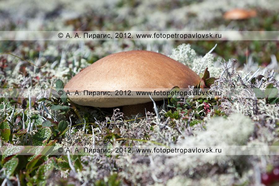 Фотография: гриб