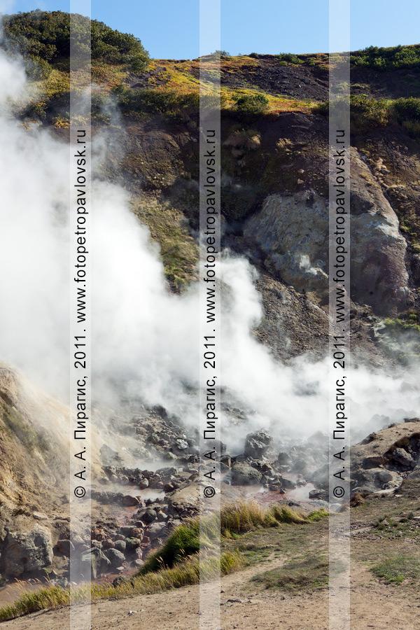 Фотография: гейзеры. Дачные термальные источники на Камчатке, Активная группа (Котел) Дачных термальных источников
