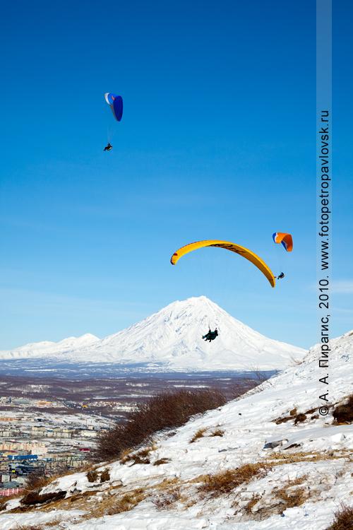 Фотография: парапланы парят над Петропавловском-Камчатским, на заднем плане — Корякский вулкан