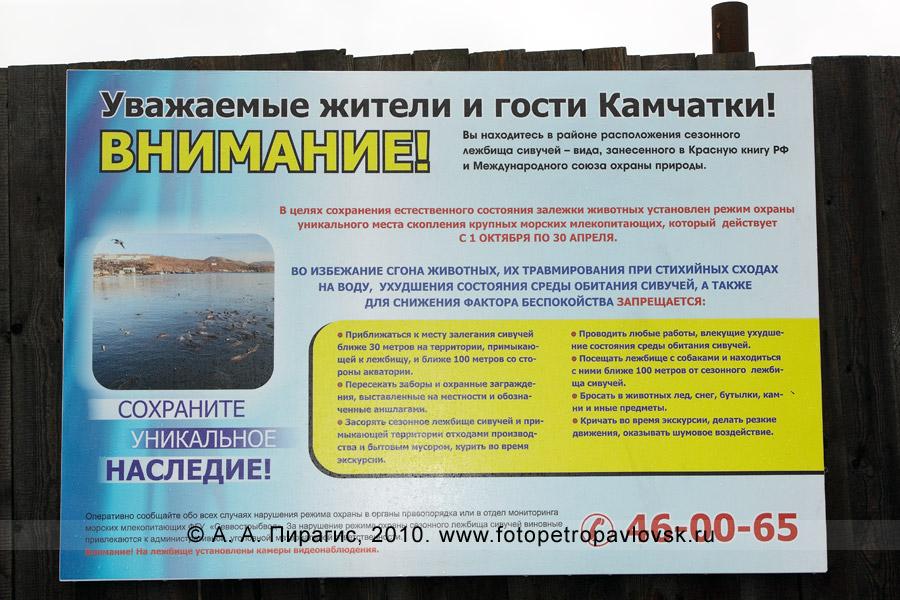Фотография: плакат (аншлаг), размещенный на заборе, возле лежбища сивучей на берегу бухты Моховой Авачинской губы (Петропавловск-Камчатский)