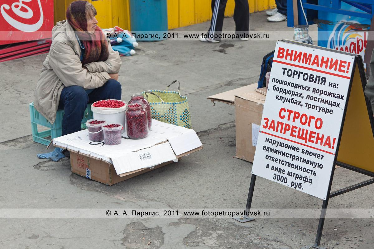 """Фотография: торговля брусникой на стихийном рынке у фонтана на 6-м километре в городе Петропавловске-Камчатском. Надпись на плакате: """"Внимание! Торговля на: пешеходных дорожках, бордюрах, лестницах, клумбах, тротуаре строго запрещена! Нарушение влечет административную ответственность в виде штрафа 3000 руб."""""""