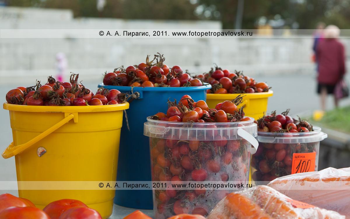 Фотография: в продаже камчатский дикорос — шиповник. Полуостров Камчатка, город Петропавловск-Камчатский