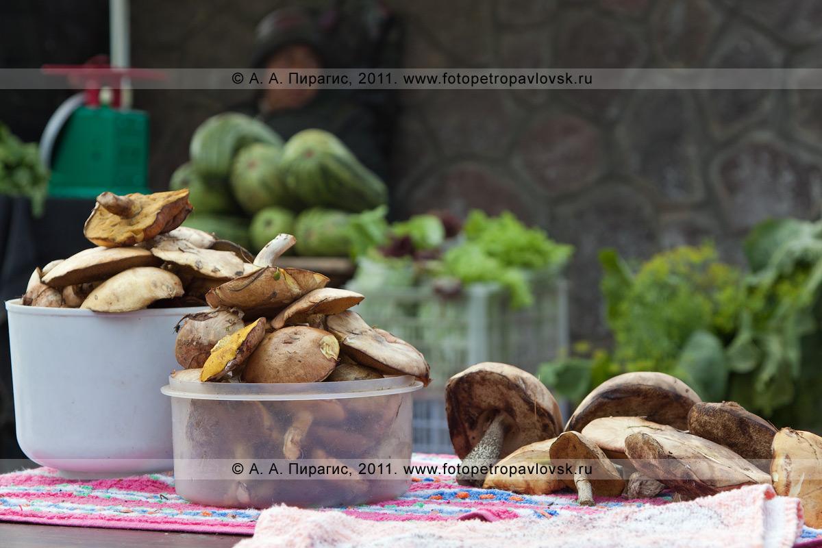 Фотография: торговый прилавок с камчатскими дикоросами — грибами. Камчатка, город Петропавловск-Камчатский, стихийный продовольственный рынок на проспекте 50 лет Октября (6-й километр, у фонтана)