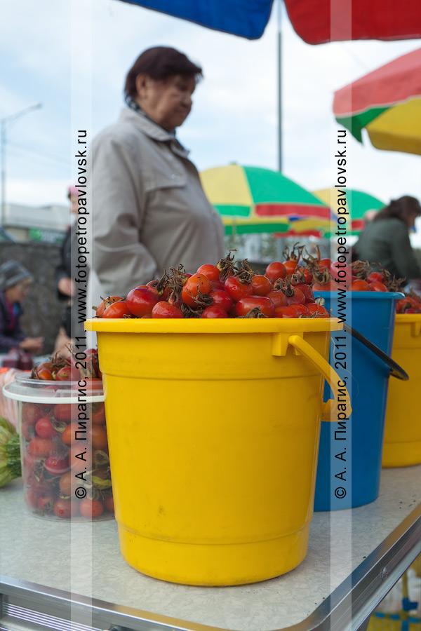 Фотография: торговый прилавок с дикоросом Камчатки — шиповником