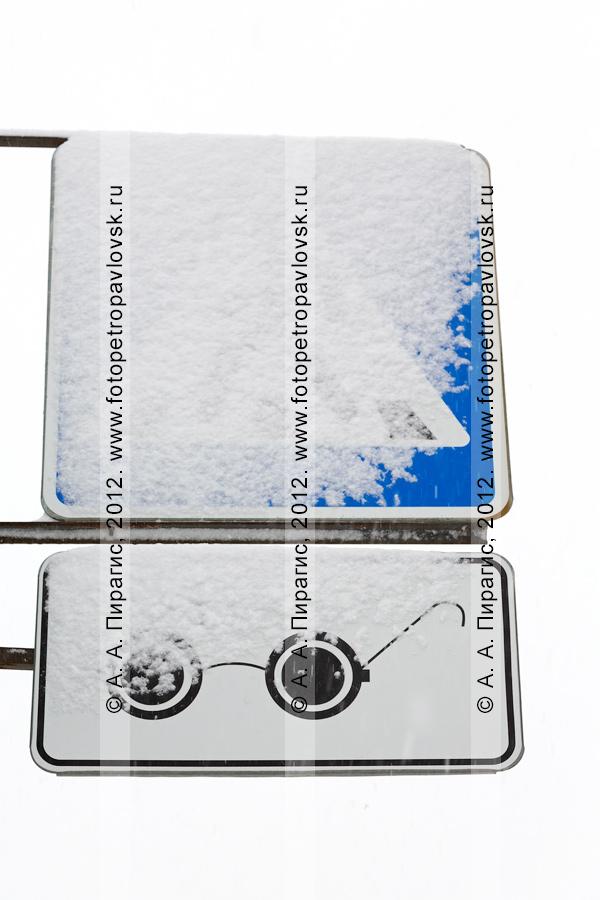 """Фотография: снегопад. Дорожный знак """"Пешеходный переход"""" и табличка """"Слепые пешеходы"""" в снегу"""