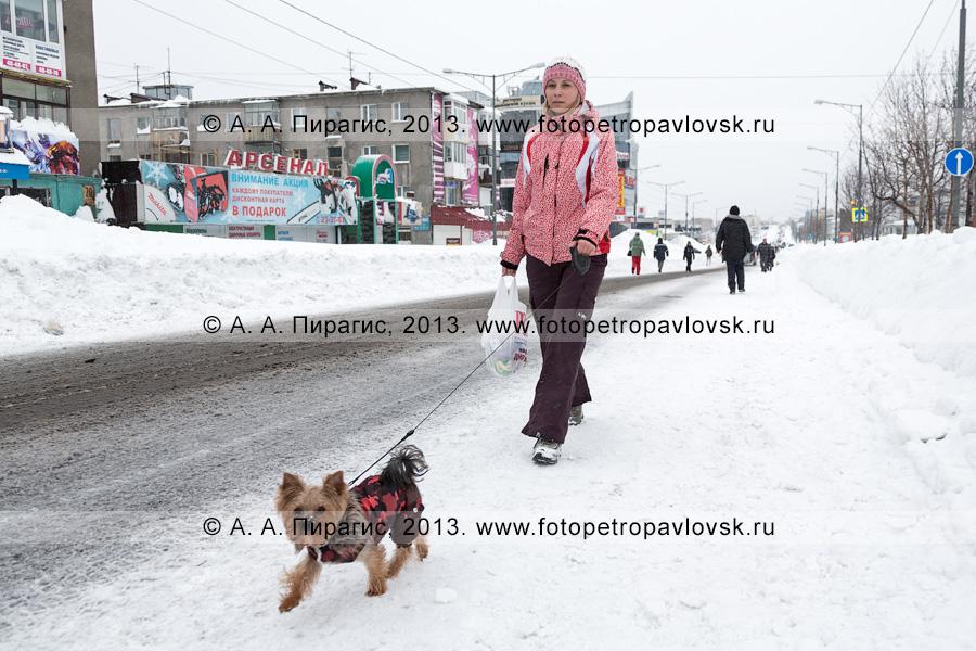 Фотография: девушка с собачкой идут по центральной дороге после пурги. Петропавловск-Камчатский, проспект 50 лет Октября