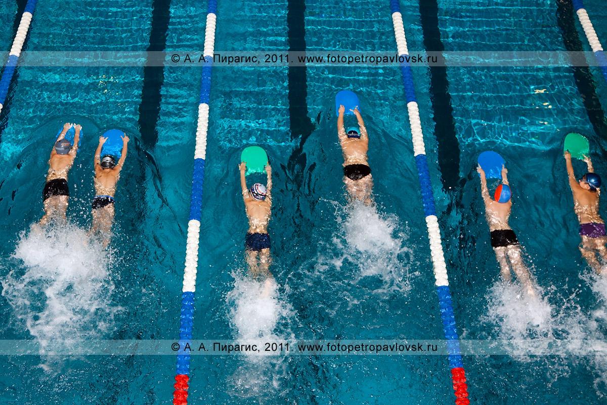 """Фотография: камчатские спортсмены плывут дистанцию 50 метров на ногах вольным стилем. Вид на пловцов с вышки. Детские старты на воде """"Веселые осьминожки"""" в плавательном бассейне на 9-м километре в городе Петропавловске-Камчатском"""