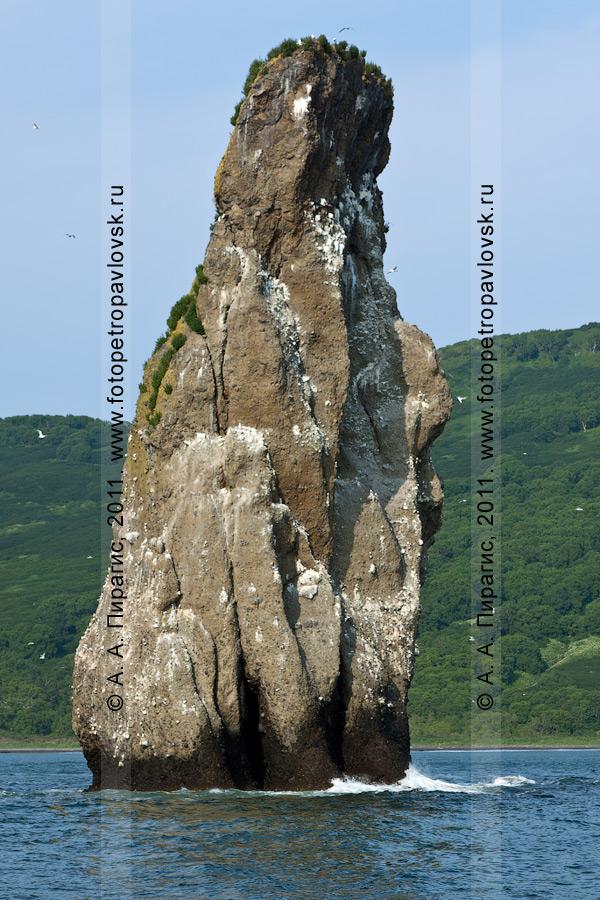 Фотография: правая скала из группы скал Три Брата. Бухта Шлюпочная, Авачинская губа (бухта), полуостров Камчатка